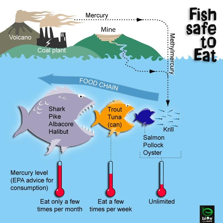 mercurio, peixes